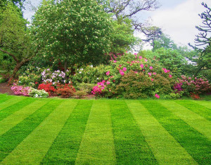 American Fork Lawn Care