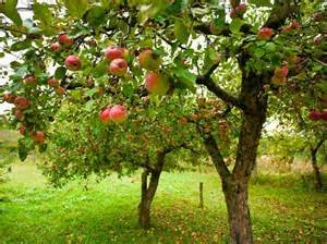 fruit tree pruning utah county